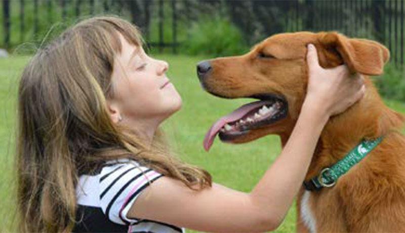 pet adoption services