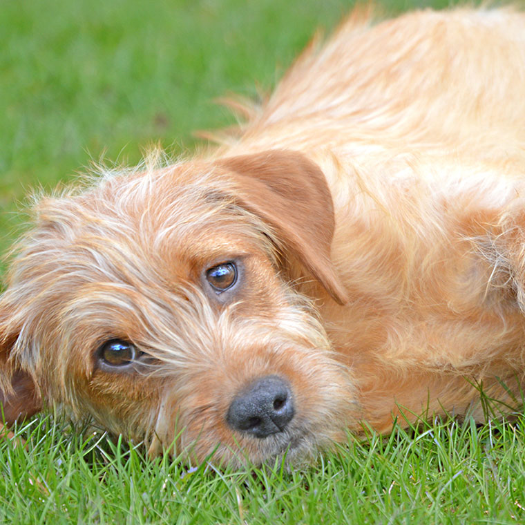 dog laying on side in grass