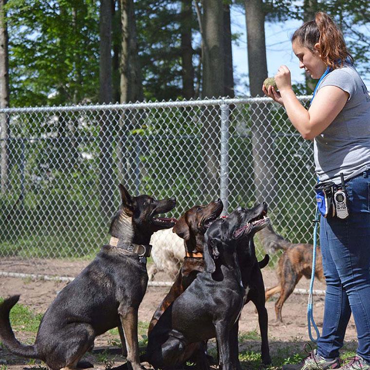 dog training session 1